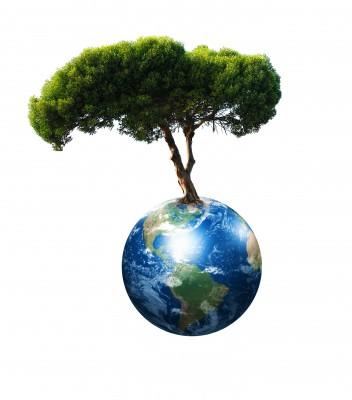 Umweltschutz essay